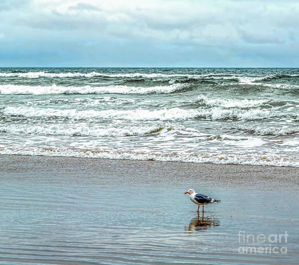 Photograph - Beach Bird by Jon Burch Photography