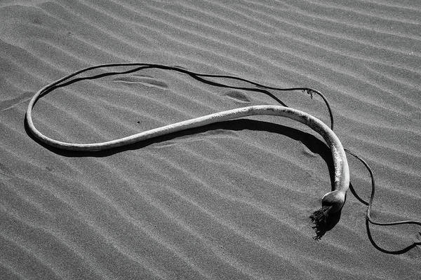 Photograph - Beach Bones 1 by Peter Tellone