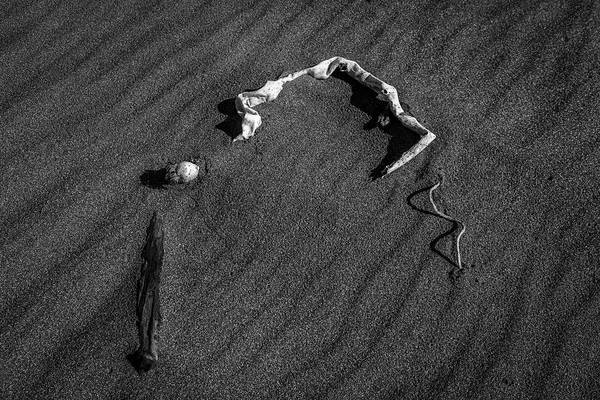 Photograph - Beach Bones 10 by Peter Tellone