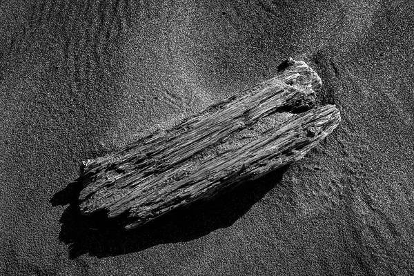 Photograph - Beach Bones 12 by Peter Tellone