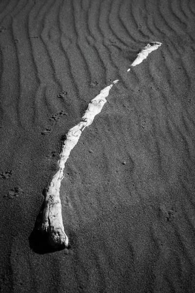Photograph - Beach Bones 13 by Peter Tellone
