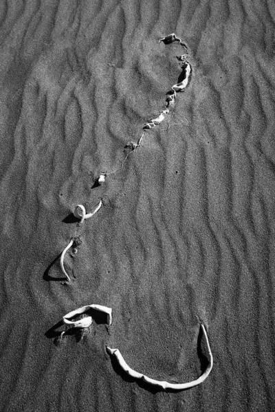 Photograph - Beach Bones 14 by Peter Tellone