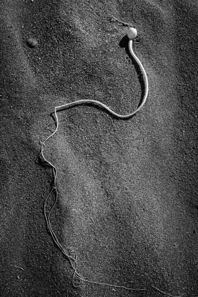 Photograph - Beach Bones 15 by Peter Tellone