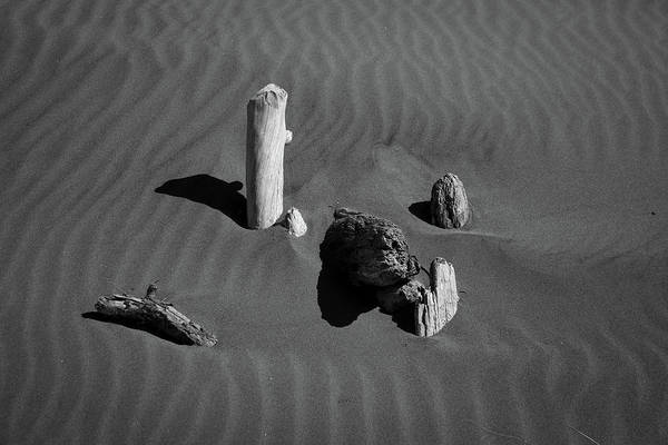 Photograph - Beach Bones 5 by Peter Tellone