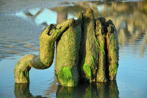 Photograph - Beach Buddies by Bruce Gourley