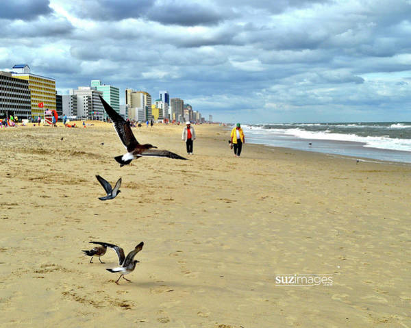 Photograph - Beach Comber Traffic by Susie Loechler