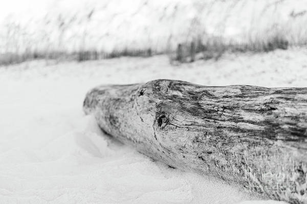 Wall Art - Photograph - Beach Driftwood Pensacola Florida Black And White Photo by Paul Velgos