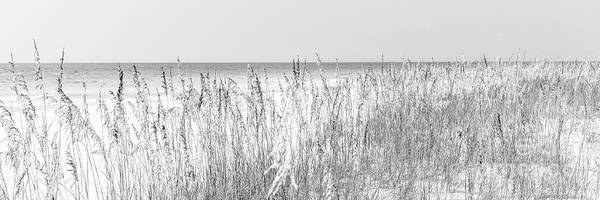 Wall Art - Photograph - Beach Dune Grass And Sea Oats Black And White Panorama by Paul Velgos