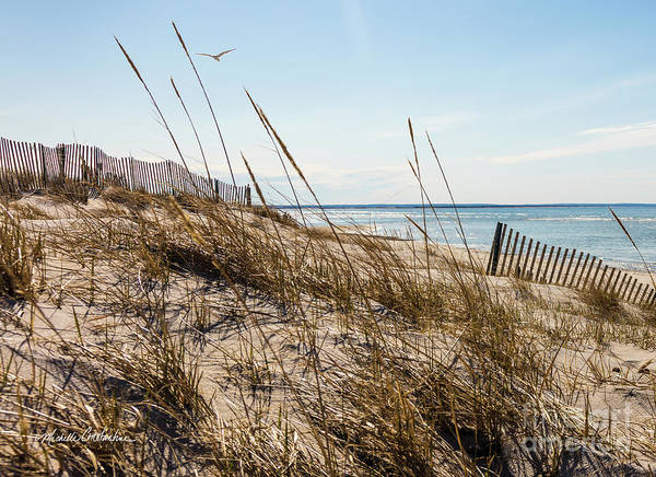 Wall Art - Photograph - Beach Fence Cape Cod by Michelle Constantine