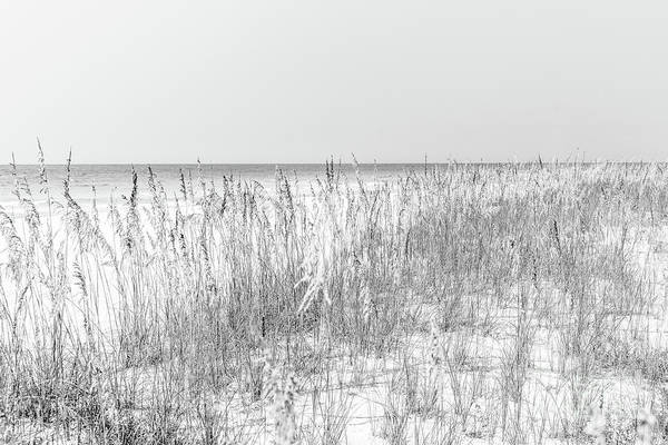 Wall Art - Photograph - Beach Grass And Sea Oats  Florida Black And White Photo by Paul Velgos