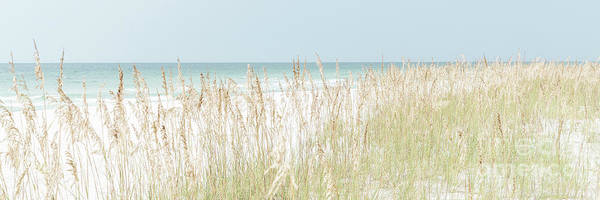 Wall Art - Photograph - Beach Grass And Sea Oats Pensacola Florida Panorama by Paul Velgos