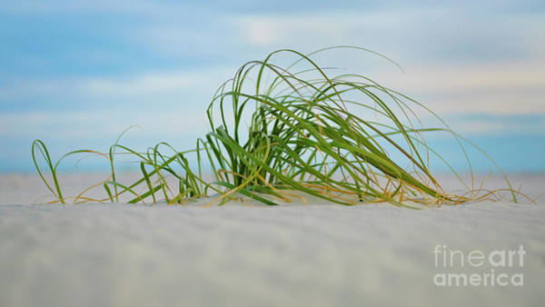 Photograph - Beach Grass by Patrick M Lynch