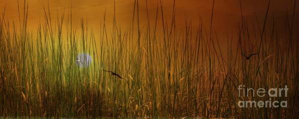 Photograph - Beach Grasses by Marcia Lee Jones