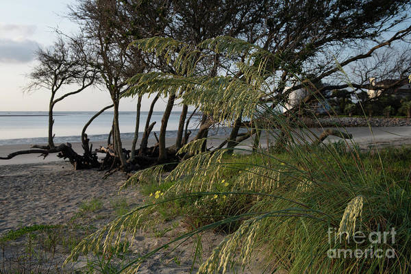 Photograph - Beach Hideout - Breach Inlet by Dale Powell