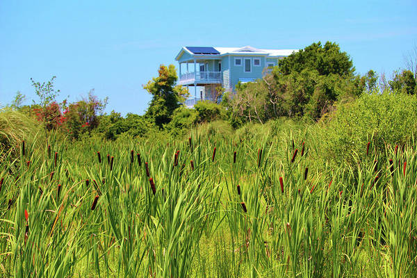 Photograph - Beach House With Cattails by Cynthia Guinn