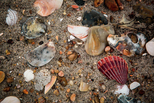 Photograph - Beach Life by Pete Federico