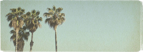 Bleached Photograph - Beach Palms - Vintage Look Series by Farukulay