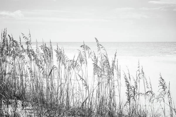 Wall Art - Photograph - Beach Sea Oats Grass Florida Black And White Photo by Paul Velgos