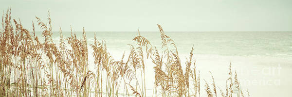 Wall Art - Photograph - Beach Sea Oats Grass Pensacola Florida Retro Panorama Photo by Paul Velgos