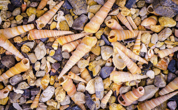 Photograph - Beach Shells Cat Ba by Gary Gillette