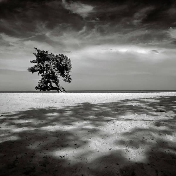 Wall Art - Photograph - Beach Tree by Dave Bowman