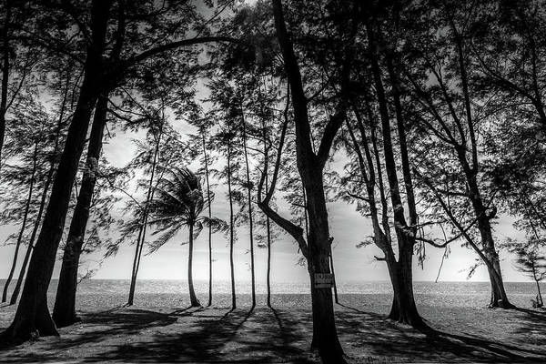 Photograph - Beach Trees Silhouettes by Georgia Fowler