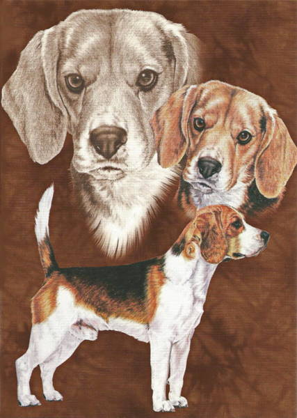 Drawing - Beagle Alteration by Barbara Keith