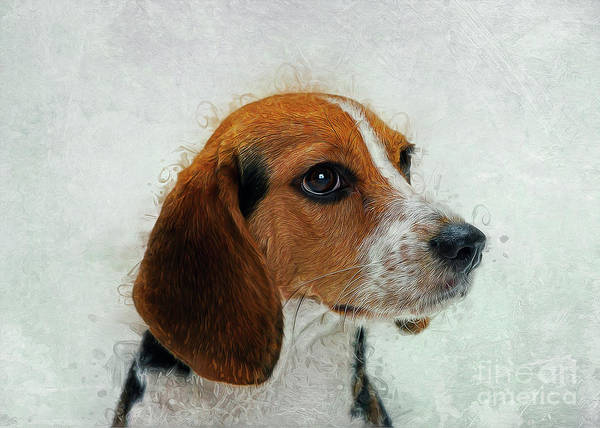 Digital Art - Beagle by Ian Mitchell