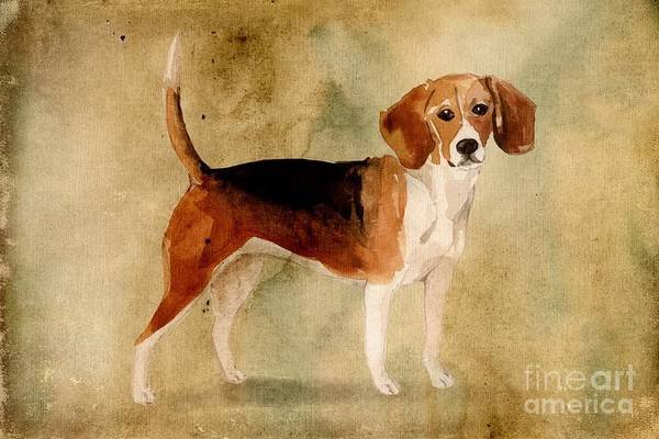 Pedigree Painting - Beagle by John Edwards