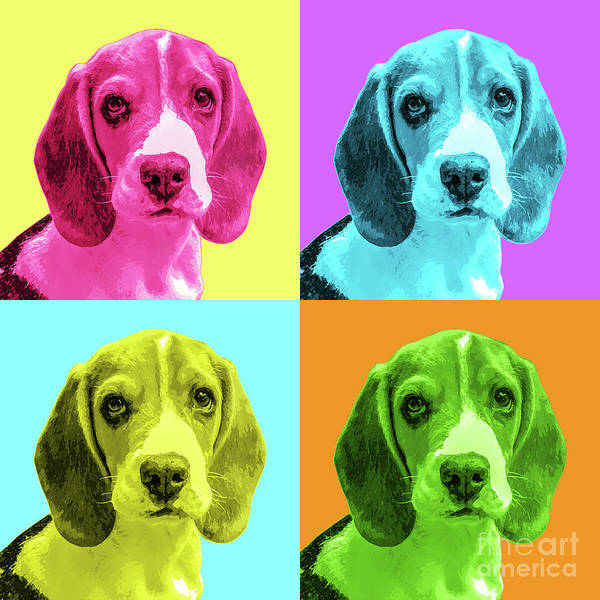 Wall Art - Photograph - Beagle Pop Art by Delphimages Photo Creations