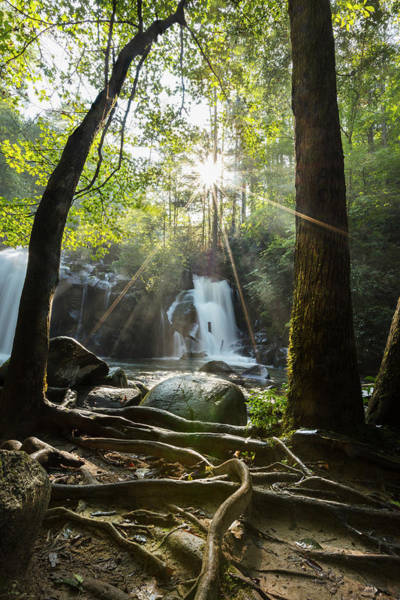 Photograph - Beaming Through The Trees by Debra and Dave Vanderlaan