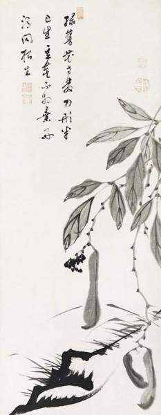 Wall Art - Painting - Bean Vine Illustration By Ito Jakuchu  1716  1800  by Celestial Images