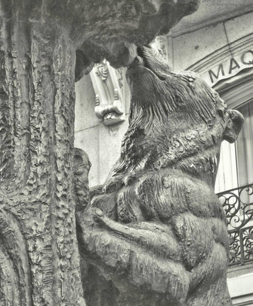 Photograph - Bear And The Strawberry Tree by JAMART Photography