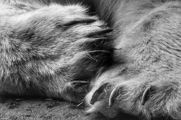 Wall Art - Photograph - Bear Claws by Kathi Isserman