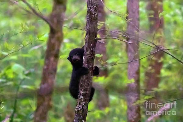 Wall Art - Photograph - Bear Cub Considers Consequent by Banyan Ranch Studios