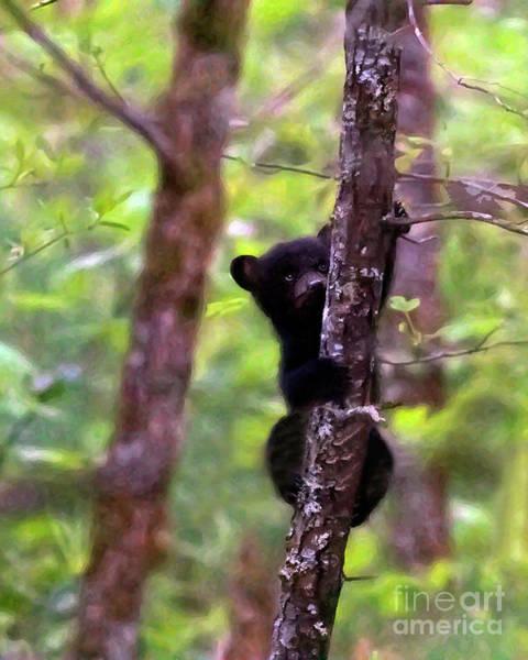 Wall Art - Photograph - Bear Cub's Springtime Climb by Banyan Ranch Studios