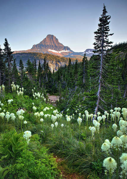 Photograph - Bear Grass, Evergreens And Mountains  by Harriet Feagin