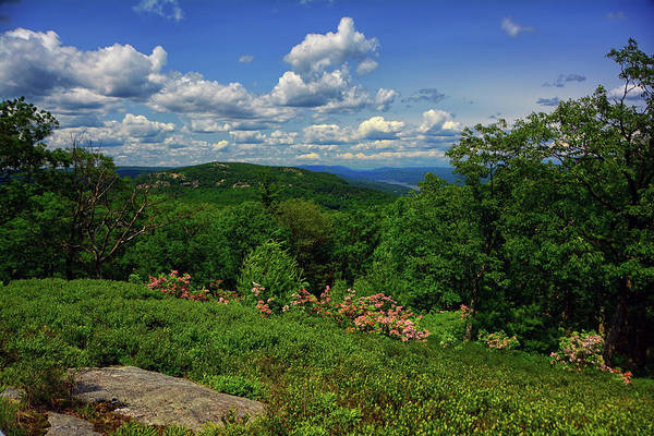 Photograph - Bear Mountain, Mountain Laurel, Hudson River From West Mountain by Raymond Salani III