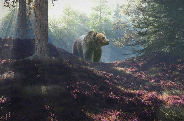 Digital Art - Bear by Per Andersson