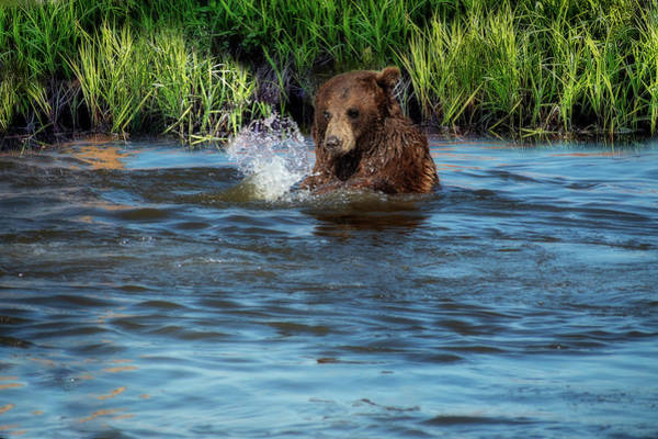 Photograph - Bear Playing In The Water by Dan Friend