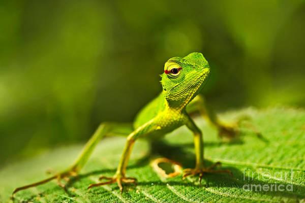 Lizard Wall Art - Photograph - Beautiful Animal In The Nature Habitat by Ondrej Prosicky