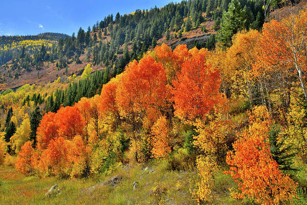 Photograph - Beautiful Aspens En Route To Mcclure Pass by Ray Mathis