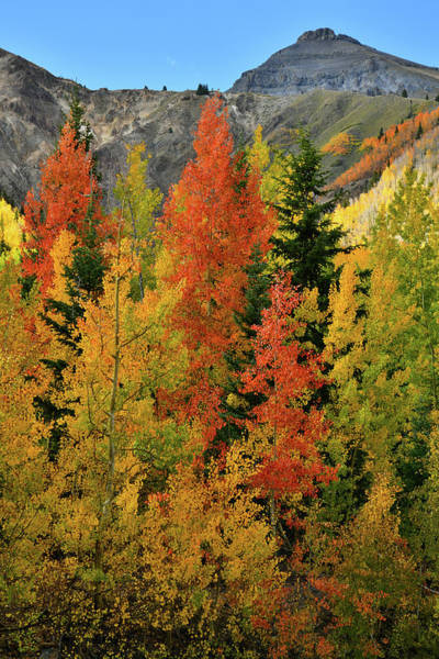 Photograph - Beautiful Aspens In Fall At Red Mountain Pass by Ray Mathis