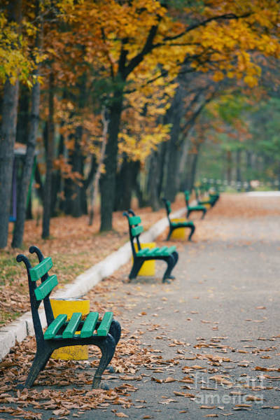 Beautiful Autumn Trees In City Park Art Print