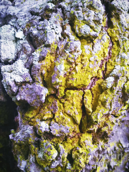 Photograph - Beautiful Bark by Robert Knight
