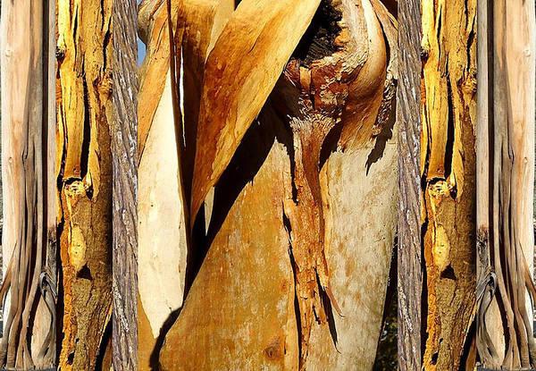 Photograph - Beautiful Bark  by Sherrie Hall
