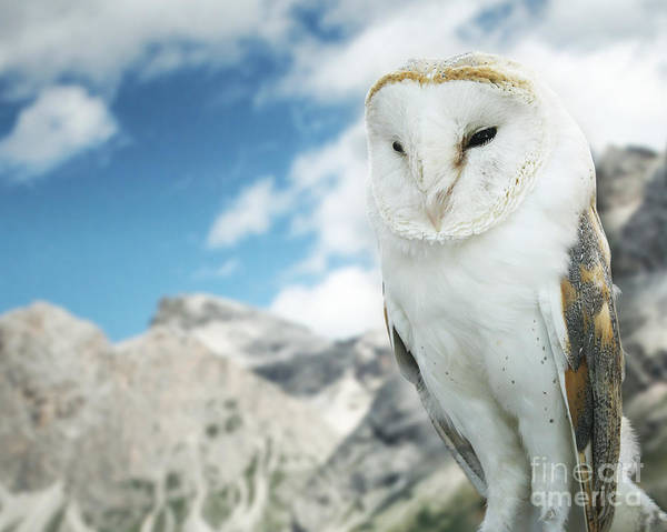 Wall Art - Photograph - Beautiful Barn Owl In To The Wild Nature by Valentina Photos
