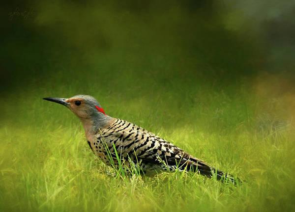 Northern Flicker Digital Art - Beautiful Bird by Joanna Kovalcsik