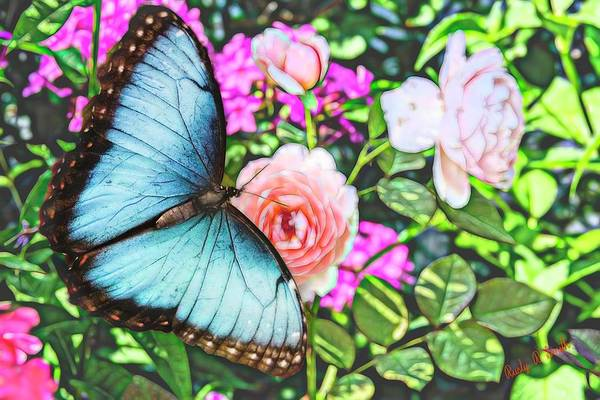 Digital Art - Beautiful Blue Morpho  Butterfly On Pink Rose. by Rusty R Smith