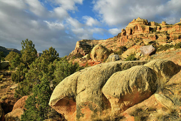 Photograph - Beautiful Boulders In Colorado National Monument by Ray Mathis